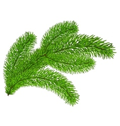 Twig of evergreen vector image vector image