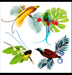 Colorful birds of paradise sitting on branches vector