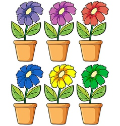 Pots with flowering plants vector image