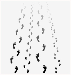 Black footprints vector image vector image