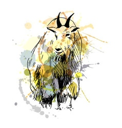 Colored hand drawing of a mountain goat vector