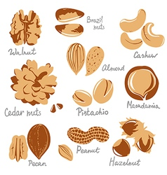 Stylized nuts vector