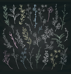 chalk drawing herbs plants and flowers vector image