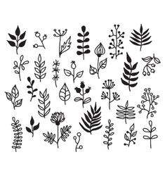 Set of hand-draw floral elements with vector