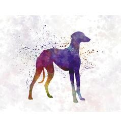 Arabian greyhound in watercolor vector