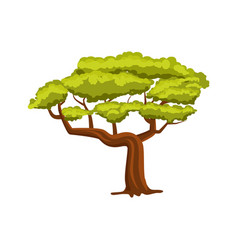 oak green tree icon vector image