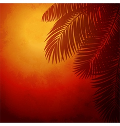 Branches of palm trees at sunset vector