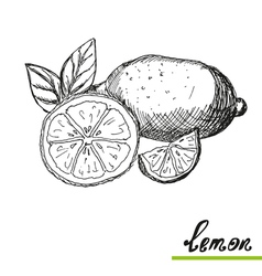 Hand drawn lemons vector