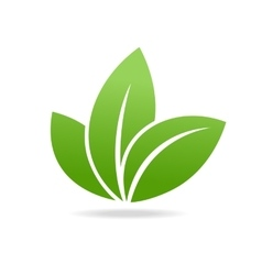 Eco icon with green leaf isolated on white vector