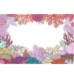 frame of corals vector image vector image