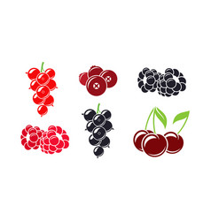 fresh berries vector image vector image