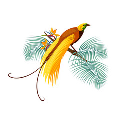 Greater bird-of-paradise with yellow tail sitting vector