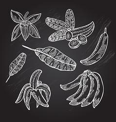 Hand drawn bananas vector