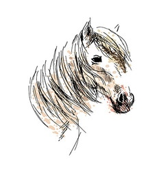 Colored hand drawing horse head vector