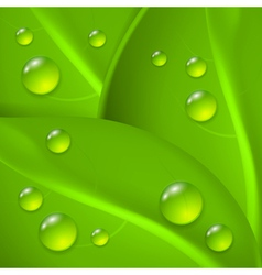 Green background with leafs and drop of dew vector image