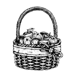 Hand drawn basket with apples sketch vector