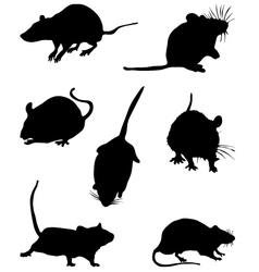 mouses vector image