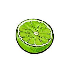 Half of ripe green lime sketch vector