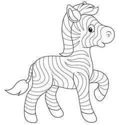 small zebra foal vector image