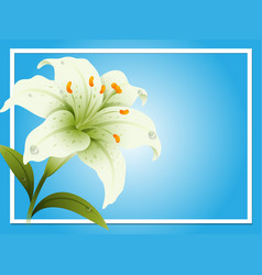 border template with white lily vector image vector image