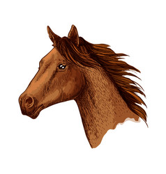 horse trotter head sketch symbol vector image