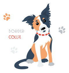 funny border collie tricoloured dog sitting vector image
