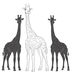 Set of with giraffes vector image