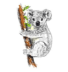 Colored hand drawing koala vector image vector image