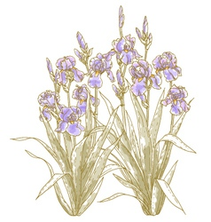 iris bush on white backgrond vector image vector image