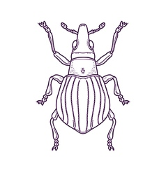 Outline Beetle Bug Insect vector image vector image