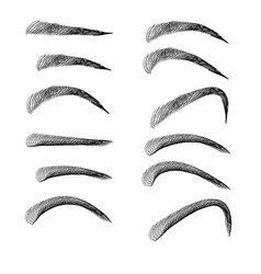 Set of outline eyebrows in different shapes and vector