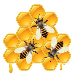 Bees on honeycells vector