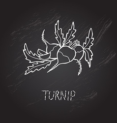 hand drawn turnips vector image vector image