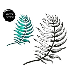 Palm tree leaf a vector