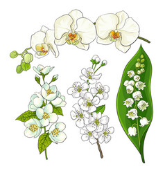 White flowers - lily of the valley orchid apple vector
