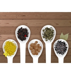 different spices in spoons vector image vector image