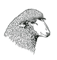 Head of sheep drawn in etching style farmed vector