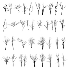 black silhouette of a bare tree vector image vector image