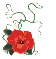 Hibiscus flower vector