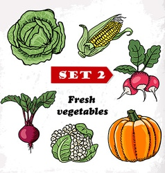 Set 2 Fresh vegetables cabbage corn radish pumpkin vector image