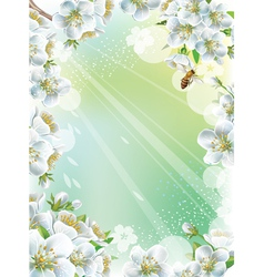 Frame with cherry blossom vector image