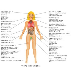 Viral infections vector