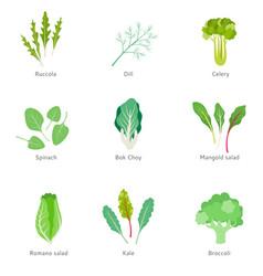 healthy ingredients for vegetable salad vector image