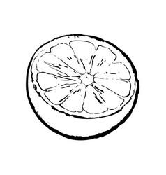 Half of ripe lime sketch vector