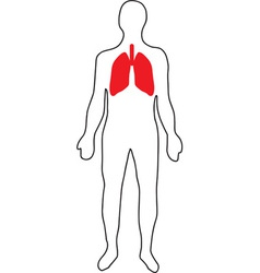 Schematic representation of the lungs vector image
