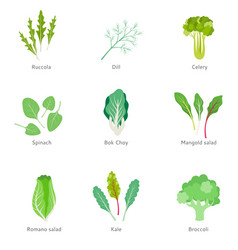 healthy ingredients for vegetable salad vector image