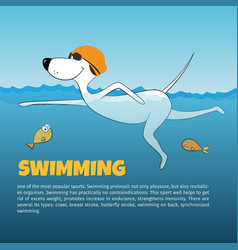 Dog swimming in the water vector image