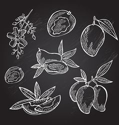 Hand drawn mango fruits vector
