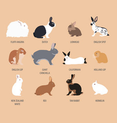 Rabbit lapin breed icon set flat design vector