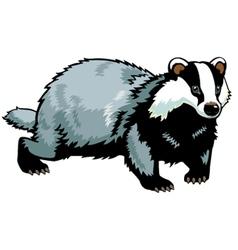 standing badger vector image
